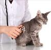 Ветеринарные клиники в Беково